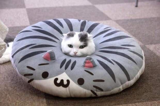 【猫画像】ねこUFO