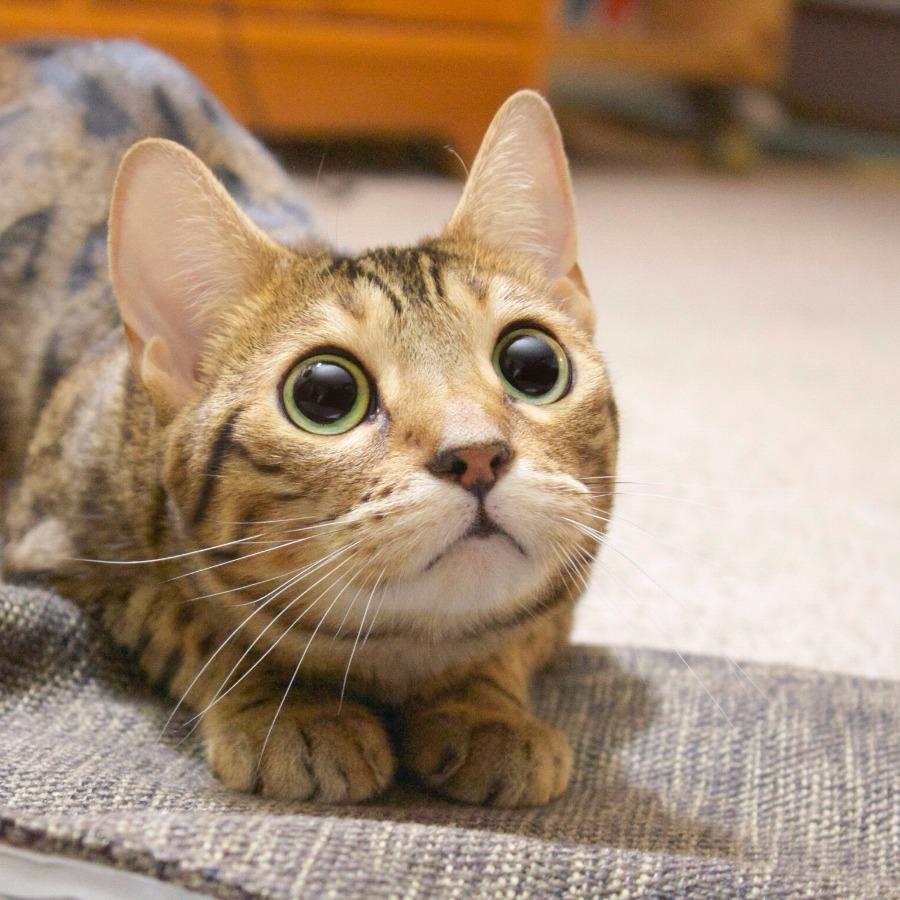 【猫画像】ハッ!