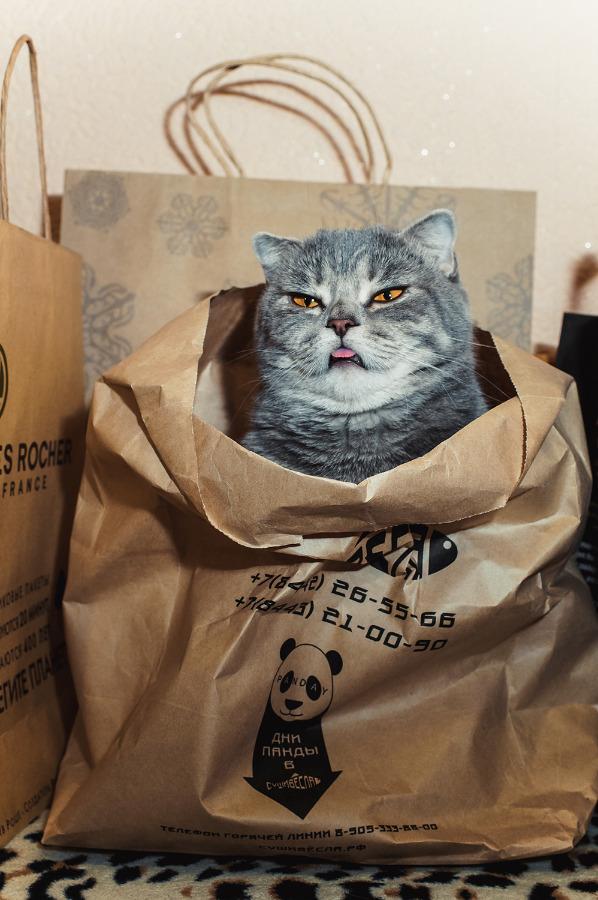 【猫画像】ワシを怒らせたな・・・