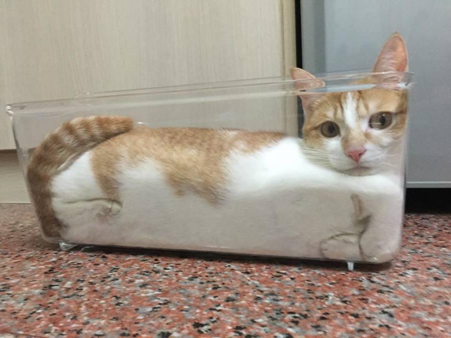 【猫画像】猫詰め