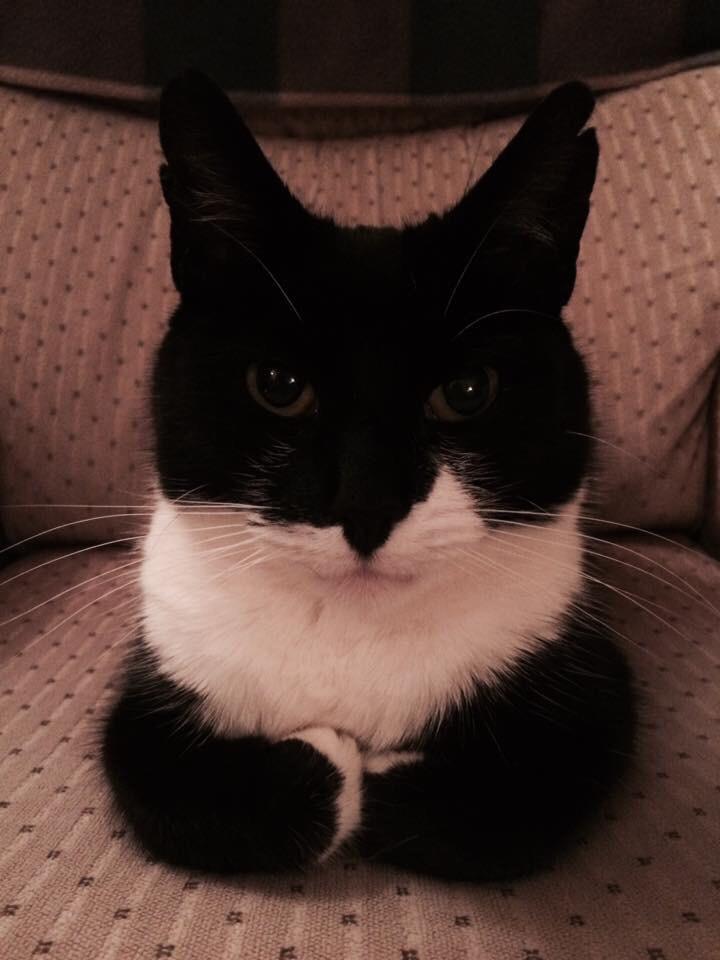 【猫画像】さあ話してごらん
