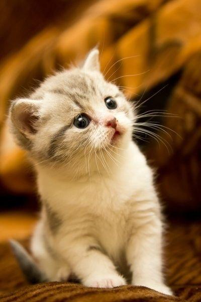 【猫画像】キョトン
