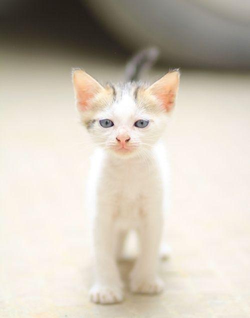 【猫画像】匂いにつられて来ました