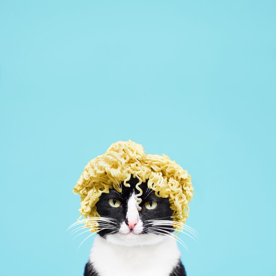 【猫ネタ】この猫、クリエイティブすぎる!!INSTAGRAMで人気のポップでオシャレな猫写真とは・・・!?