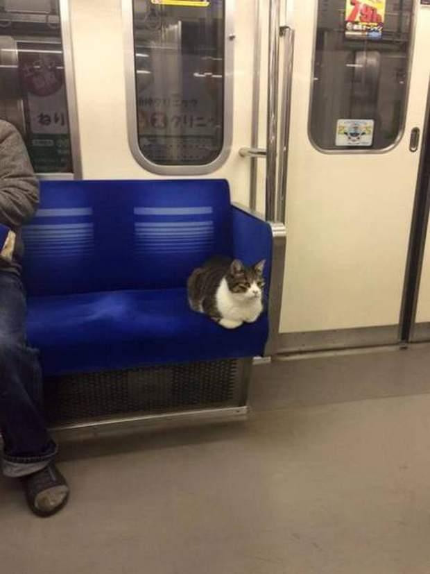 【猫画像】イスをゲット!