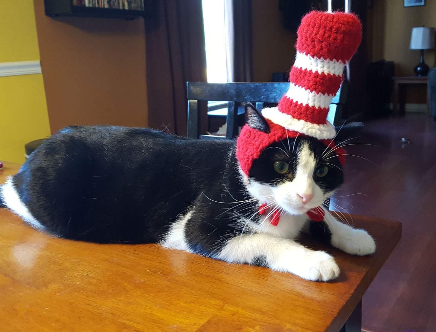 【猫画像】変な帽子?