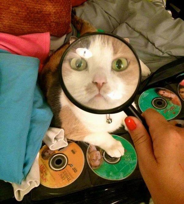 【猫画像】どれどれ