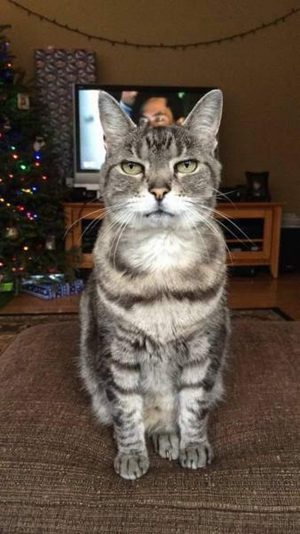 【猫画像】真顔!