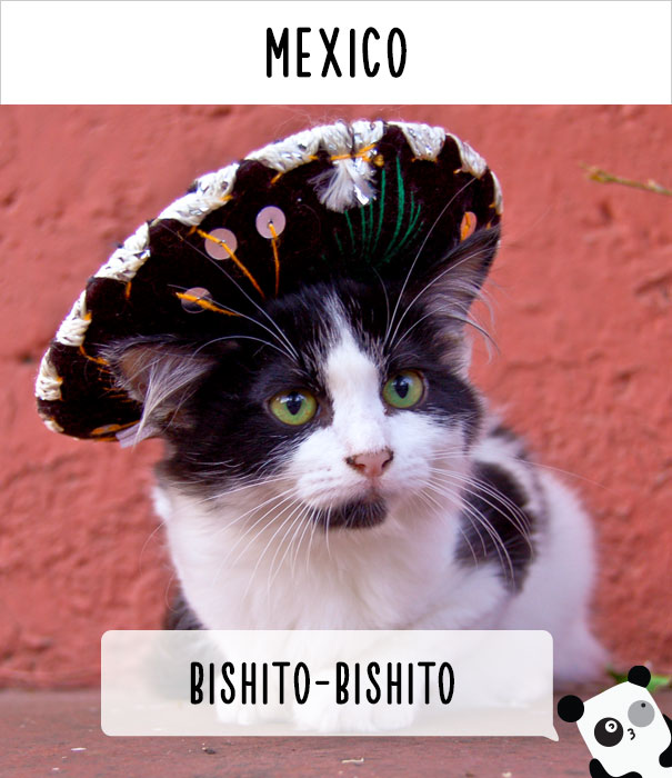 【猫ネタ】猫にもお国柄が出てる!?世界各国の猫を呼びかける言葉とは・・・!?
