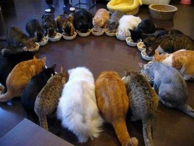 【猫画像】円陣!?