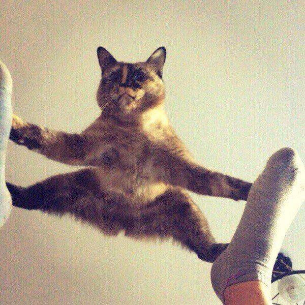 【猫画像】プルプル・・・