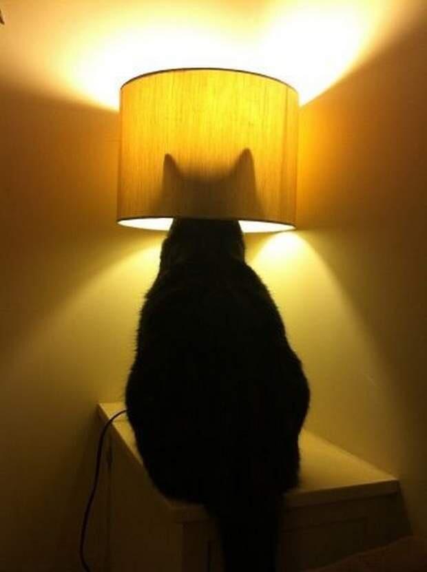 【猫画像】猫ランプ!?
