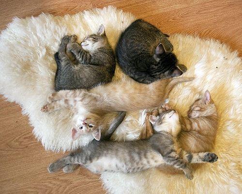 【猫画像】猫テトリス!?