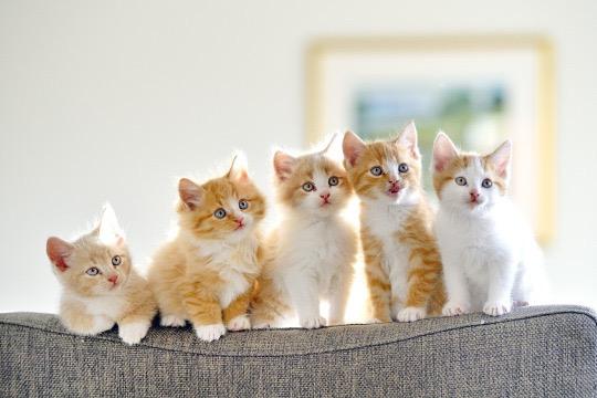 【猫画像】なんだなんだ!?