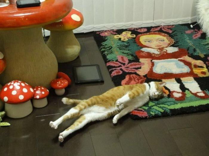 【猫画像】硬直!?