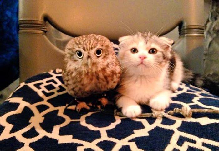 【猫画像】猫とフクロウ