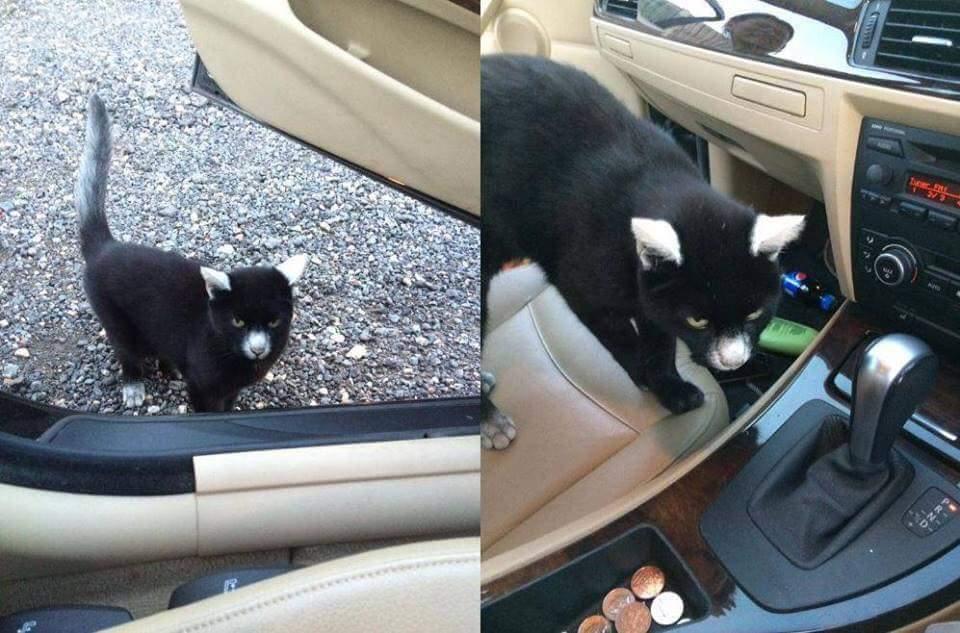 【猫画像】珍しい猫柄!?