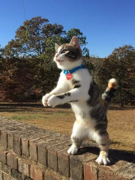 【猫画像】ファイティングポーズ!?