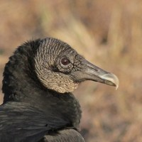 Happy International Vulture Awareness Day!