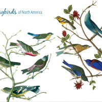Review: Songbirds of North America