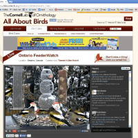 Modern Birding