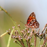 Florida Bike-birding: Ocklawaha Prairie Restoration Area