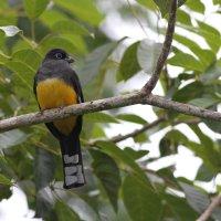 Belize Birding: Ridiculous Yard Birds