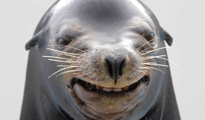 Very-Funny-Animal-Faces