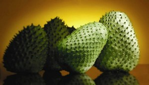 Amazing… these leaves are 1000 times stronger than Chemotherapy in killing cancer cells!!!