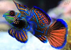 10 most beautiful fish in the world you won't believe they exist!
