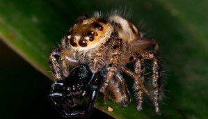 Here are the 10 Interesting facts about Spiders that are unbelievable but true!