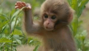 Trending video of cute little monkey.