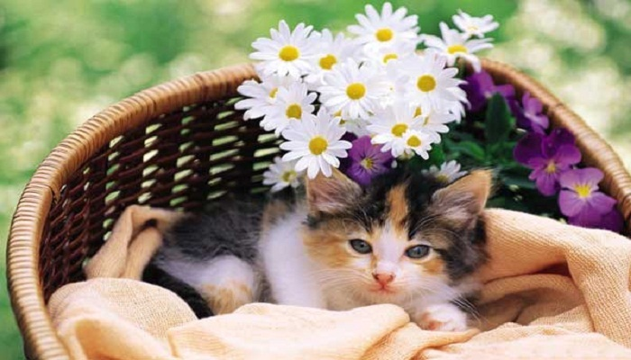 Cute-cat-Netmarkers