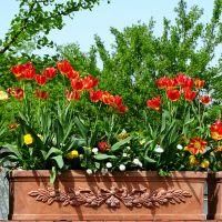 Blumeninsel Mainau - Ein Tag im Grünen