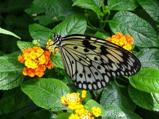Schmetterlingshaus - Insel Mainau
