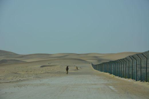 Liwa-Wüste bei Abu Dhabi