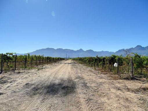 Segway-Tour über das Weingut