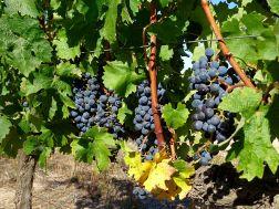 Winefarm Spier