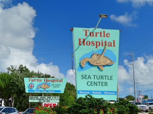 Turtle Hospital, Florida Keys