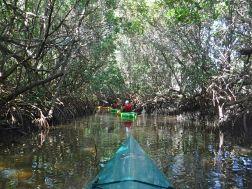 Mit dem Kajak durch den Mangrovenwald