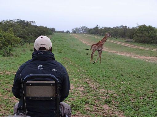 Flugplatz, Tintswalo Safari Lodge