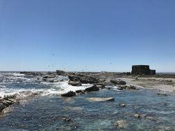 Bird Island, Lamberts Bay