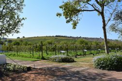 Spier Wine Farm