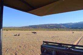 Game Drive im Bushmans Kloof