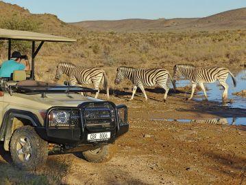 Auf Safari im Sanbona Wildlife Reserve