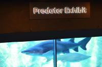 Predator Exhibition