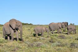 Elefantherde im Gondwana Game Reserve