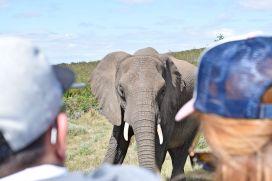 Elefant im Gondwana Game Reserve