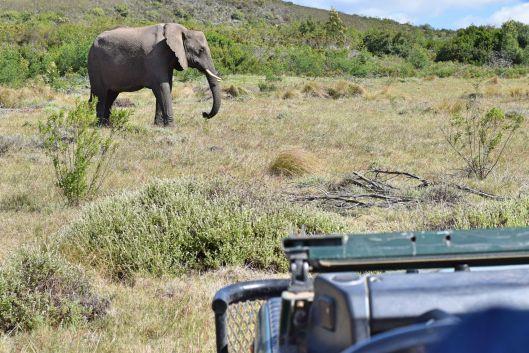 Auf Safari im Gondwana Game Reserve