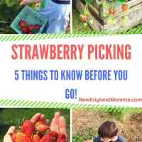 Strawberry Picking - 5 Things to Know Before You Go!